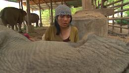 Thai Elephant Lullaby