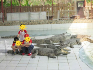 Safety and danger in Thailand/ kids crocodiles