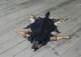 Thai dog skin
