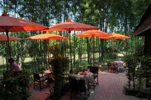 Thailand Budget Umbrellas?